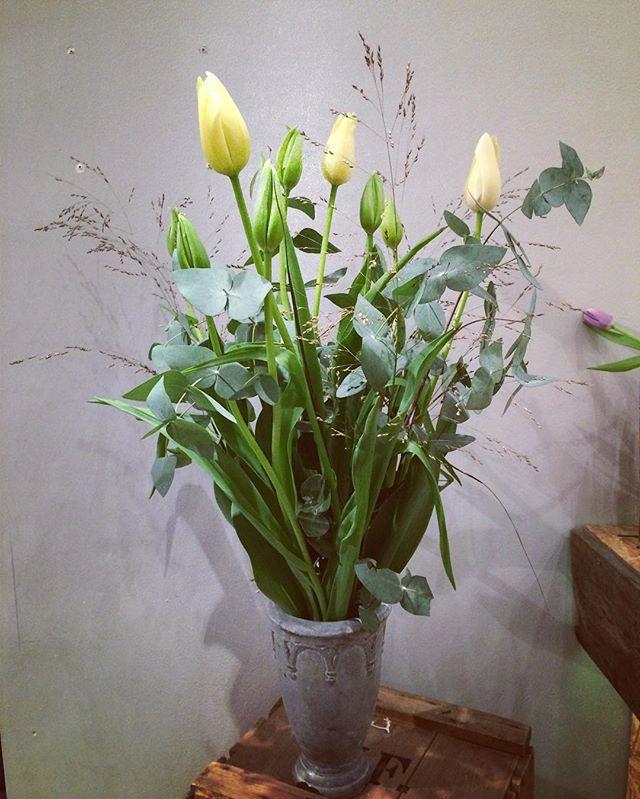Milelange franske tulipaner